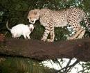Jolie con un amigo felino en un árbol