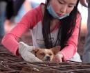 china-dogs5
