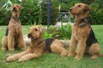 Waterside Terrier