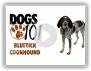 Dogs 101 - Bluetick Coonhound