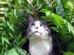 cyprus_cat
