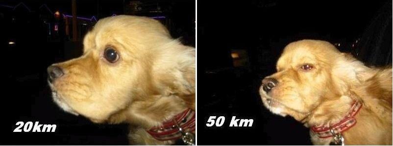 perro velocidad