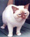 templecat
