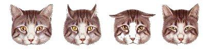 Las orejas de los gatos