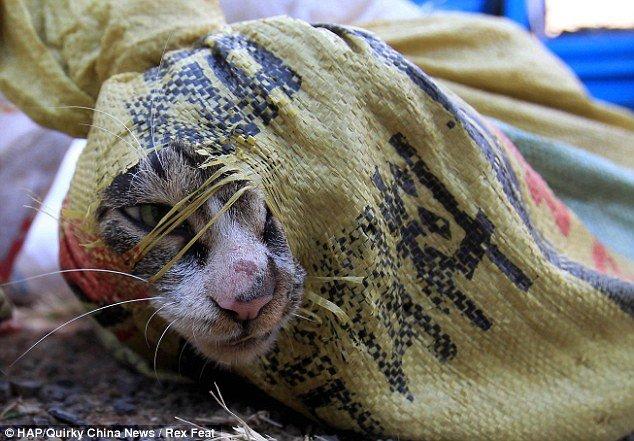 cat China