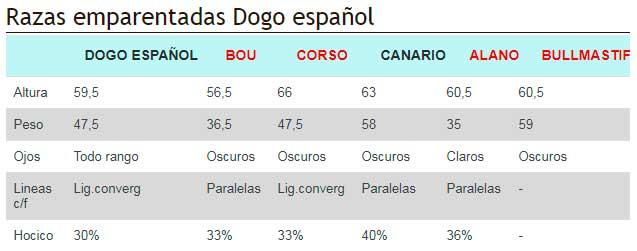 Razas emparentadas Dogo español